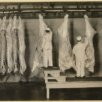 Government inspectors examine carcasses at a meatpacking establishment in Omaha, Nebraska, 1910.